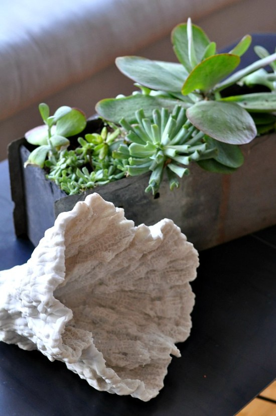 House-Crashing-Family-Room-Succulents-Shell