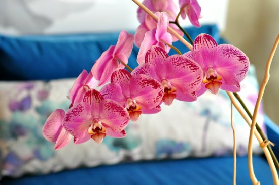 House-Crashing-Living-Room-Orchids