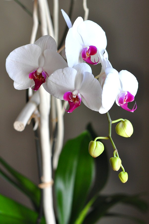 House-Crashing-Living-Room-Orchids-White